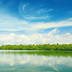 Equatorial mangroves