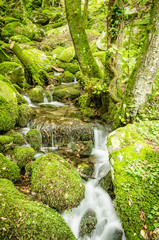 Water creek in a forest (Valle Nevera, Elba Island)