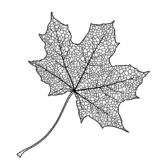 Silhouette of the textured maple leaf, vector illustration.