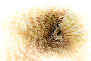 Unterwasserwelt: Röhrenwurm,El Quseir, Rotes Meer