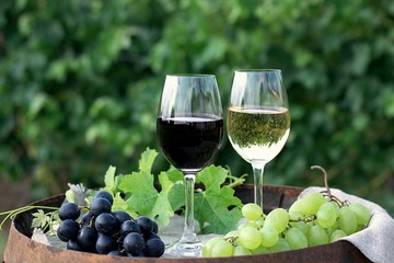 Red and white wine with grapes in nature