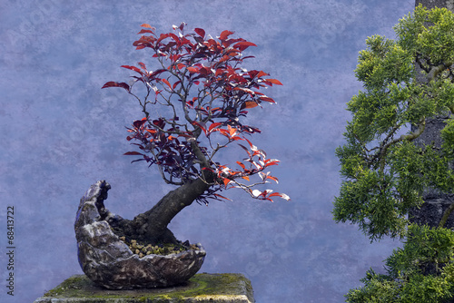 Aluminium Bonsai Bonsai tree red Plum