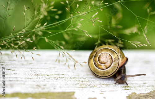 canvas print picture Gartenschnecke