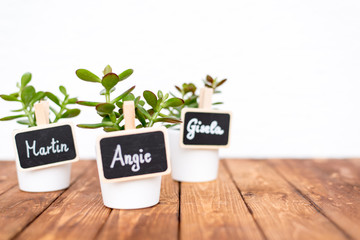 Small pot plants with name signs