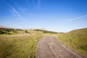Green summer farmland