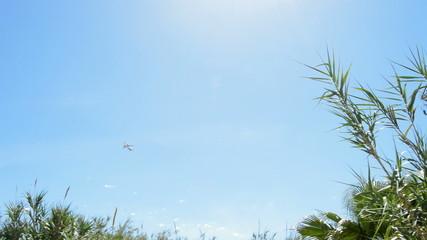 Airplane plane passing