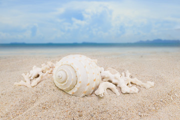 sea shells Nautilus on sand beach background collection