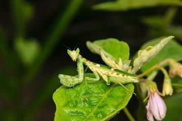 green grasshopper perching on a leaf