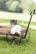 Katzenbaby draussen