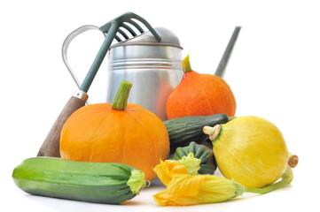 légumes de saison et outils de jardin