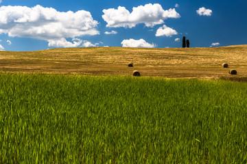 Dew Grass Green Field Weat