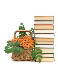 books and wicker basket with red rowan berries on a white backgr