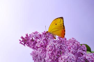 Beautiful butterfly sitting