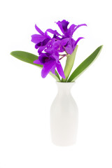 Beautiful purple orchid and ceramic vase  isolated on white back