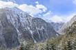 Alpine forest landscape
