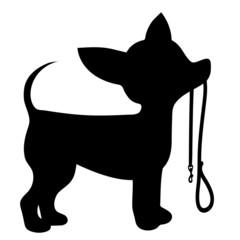 Chihuahua Leash