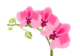 Orquídeas hermosas