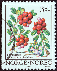 Cowberry (Norway 1995)