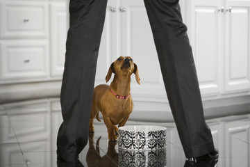 Dog looking up at owner