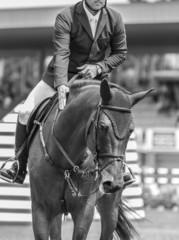 jinete y caballo