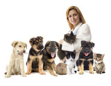 veterinarian and Pets - 68433315
