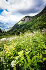 Paysage fleuri des Aravis