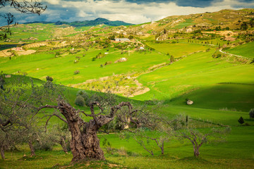 old tree with green meadow on a background