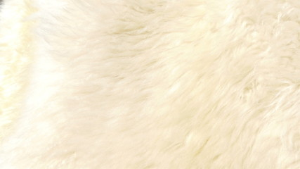 A lambskin or fur that is white in color GH4 4K UHD