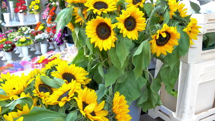 Yellow sunflowers on display in a flower shop GH4 4K UHD