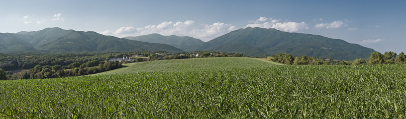 Corn and mountains