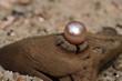 perle - 68443129
