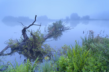 misty morning on river