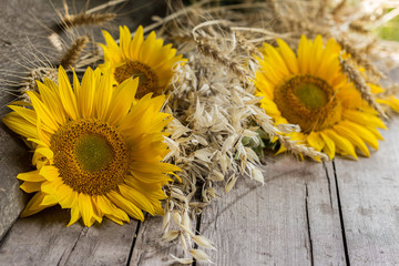 Sunflower heads and ripe cereal ears on a wooden table