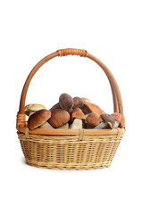 The raw boletus edulis in basket