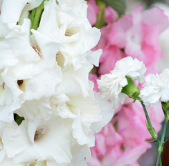 beautiful bouquet of white gladioluses, on green background