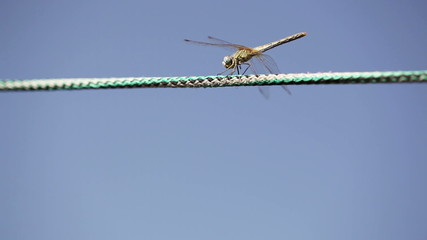 Dragonfly on rope