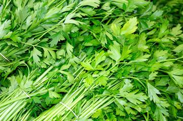 Fresh green parsley. Macro image