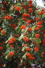 arbusti pianta in fiore