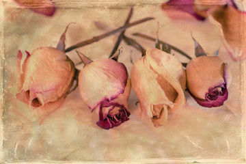 Dried Roses with vintage effect
