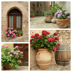 group of images with flowering hortensia plants in pots