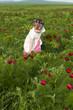 Постер, плакат: Девочка на лугу собирает цветы