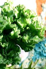 다육식물 및 선인장 이미지