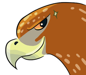 cartoon color animal expression hawk see