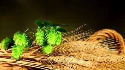 hops and barley malt in the basket,zoom in