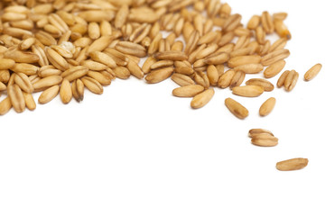 oat grain closeup, isolated on white background