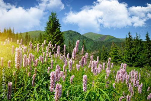 Common bistort (Persicaria bistorta) growing in the mountains - 68465990
