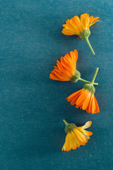 Blossoms of calendulas
