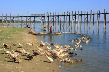 Local man in a boat near U Bein Bridge, Amarapura, Myanmar