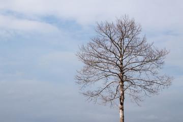 Dead tree under clean blue sky
