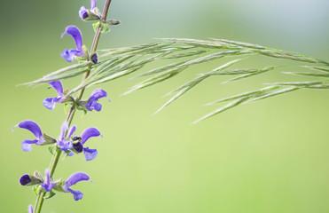 Fiore e spiga